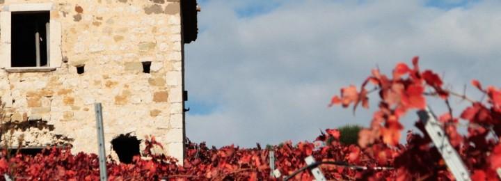 VinSannio FestivalArt. Il paesaggio vitivinicolo è una sfida da affrontare insieme. Una riflessione significativa dal convegno delle città del vino sannite!